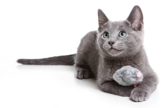 ロシアンブルーのよだれが気になる?その原因は猫風邪かも?