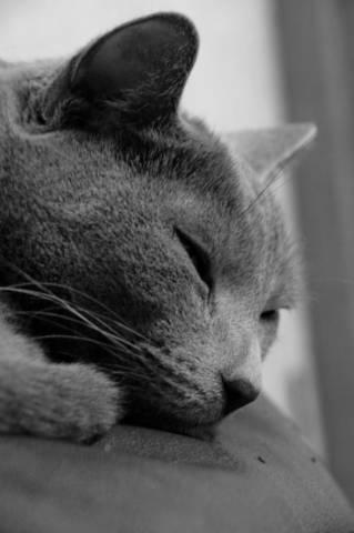 2018-10-10_09h25_44 愛猫のロシアンブルーがよく吐く?原因とその症状について解説!