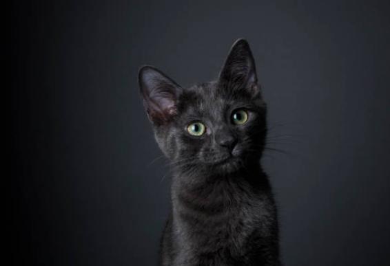 2018-10-17_09h15_13 ロシアンブルーの子猫に縞模様って出るの?ゴーストタビーについて!