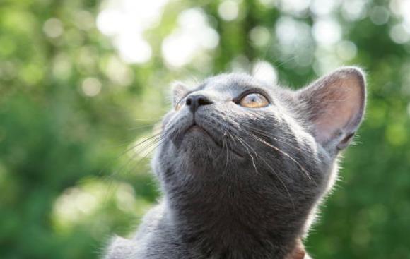 2018-11-08_10h37_35 ロシアンブルーにオススメのおもちゃは猫じゃらし?遊び方のコツを紹介