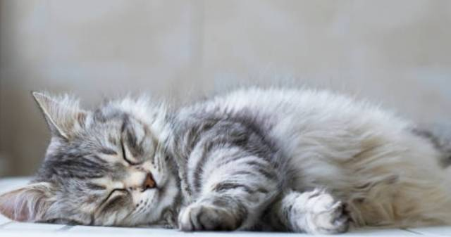 猫の年齢って人間でいうとどのくらい?換算年齢を調べました!