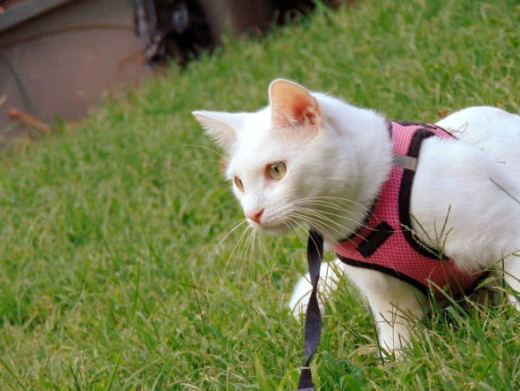 2018-10-10_09h28_06 猫の種類はどのくらい?日本で暮らす猫の種類について調べました!