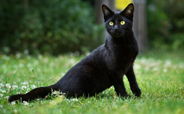 2018-11-20_23h53_00 黒猫を見ると不吉だといわれるのは何故?理由について調べました!