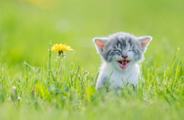 2018-11-24_10h14_27 ロシアンブルーに猫草は必要?効果と必要性について紹介!