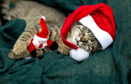 クリスマスプレゼントに最適!オススメのおしゃれな猫グッズ6選!