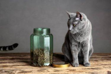 ロシアンブルーの餌用食器は人間用の洗剤で洗っても大丈夫?
